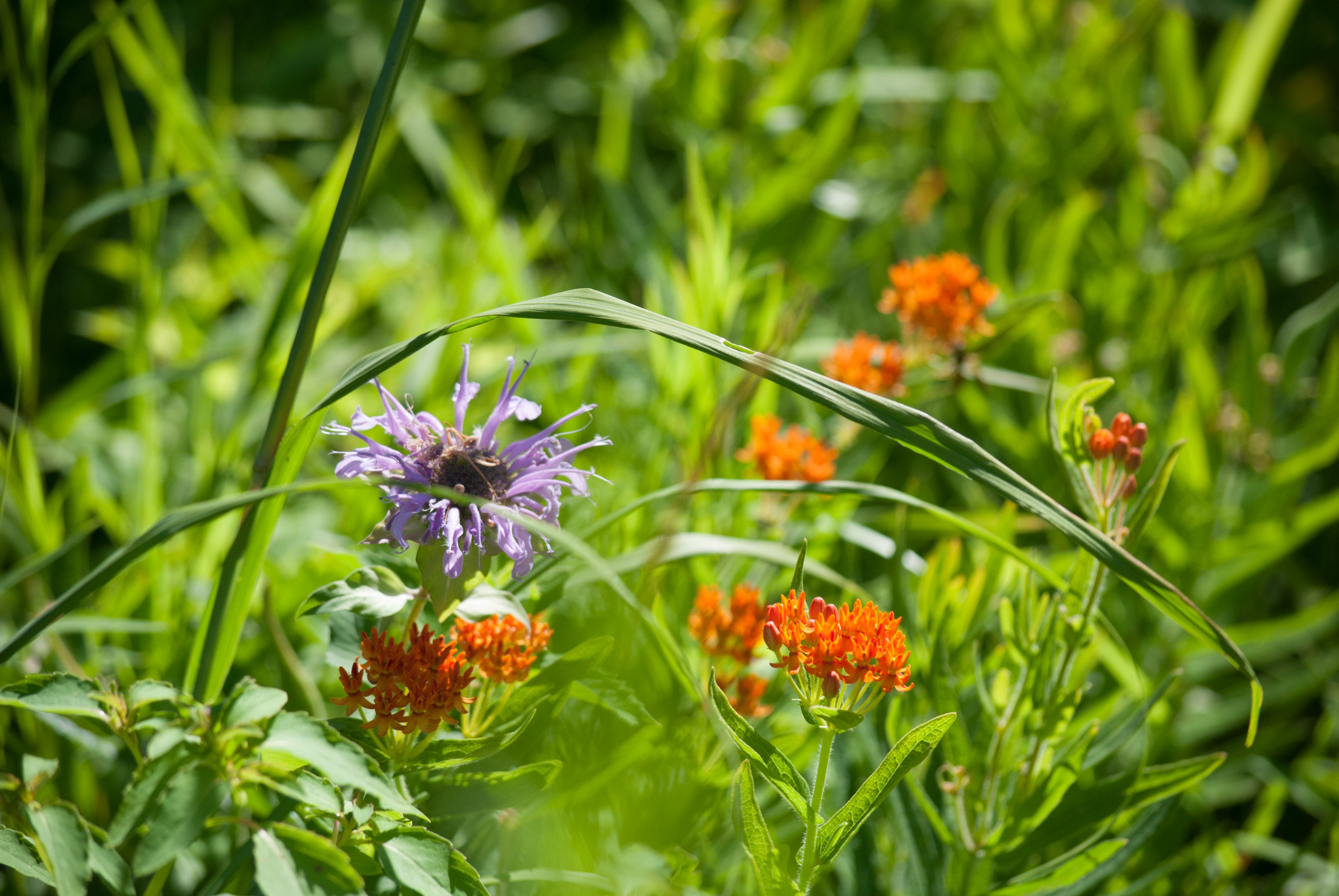 purple and orange flowers